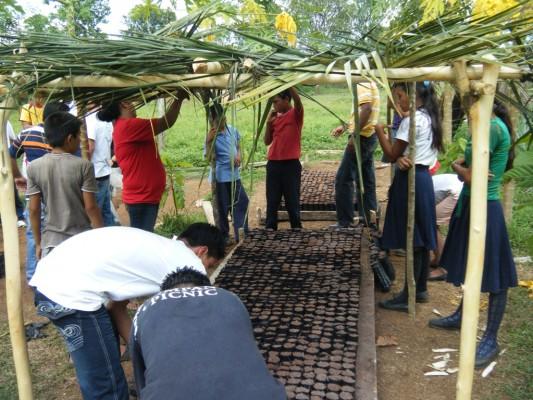 Foto 12-establiment viver forestal